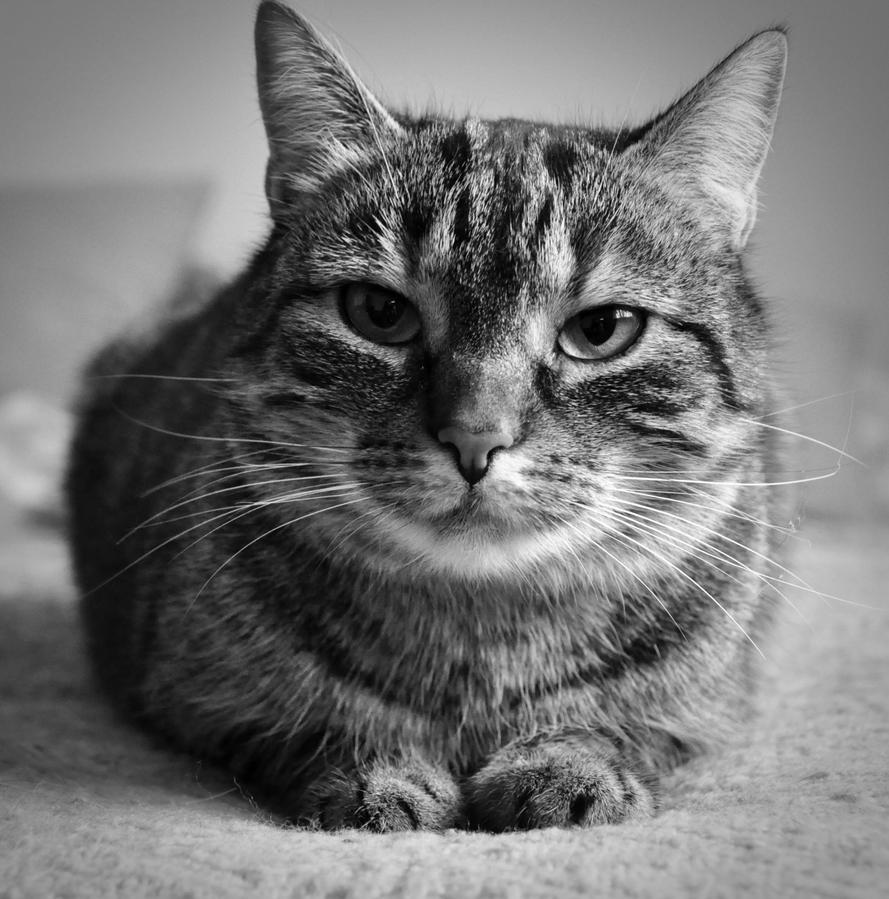 Cat by FairyCat60s