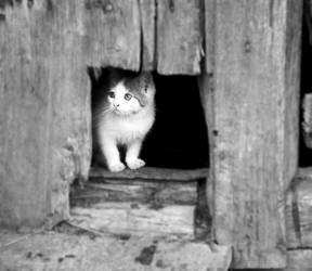 here kitty kitty by FairyCat60s