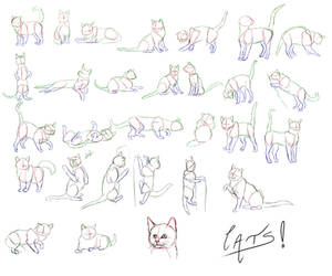 Cats Cats Cats by Golden-tetrise
