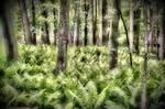 Ferns by mdandree