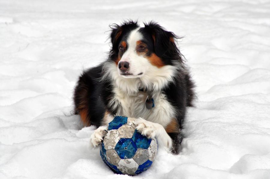 Snowball III by mdandree