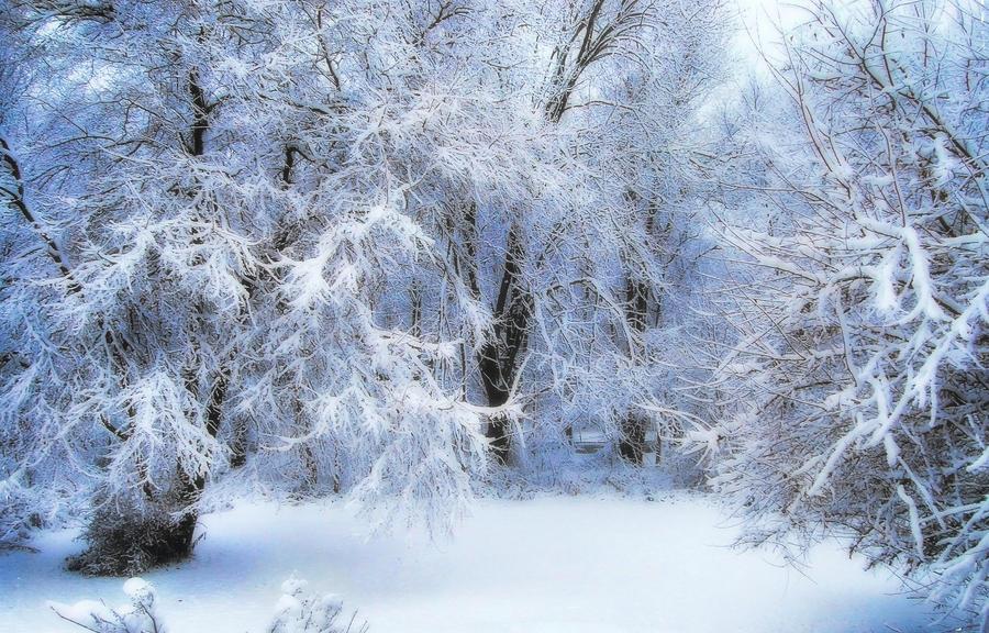 Winter in Wacousta