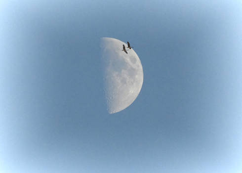 A Country Moon