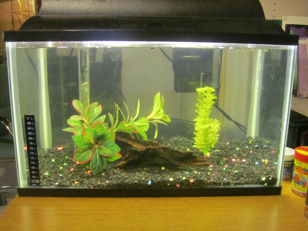 10 gallon betta tank by storm cwalker on deviantart for Fish for a 10 gallon tank