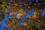 Autumn - Forrest