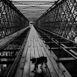 chien sur un pont by nikom