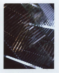polaroid 55 by nikom