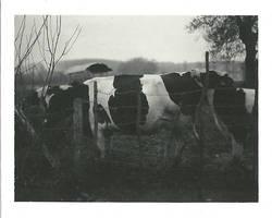 polaroid 67 by nikom