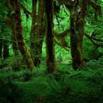 Elvish Forest by aponom