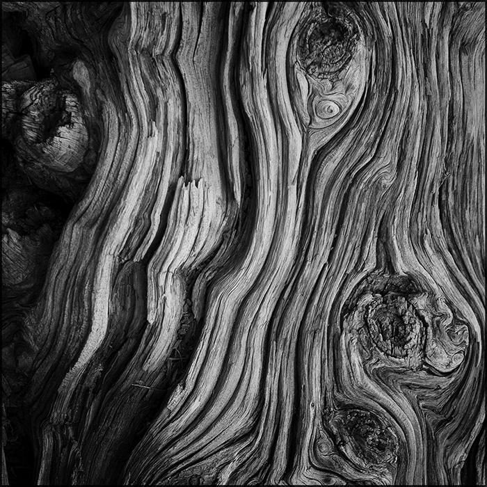 Old Tree wrinkles by aponom
