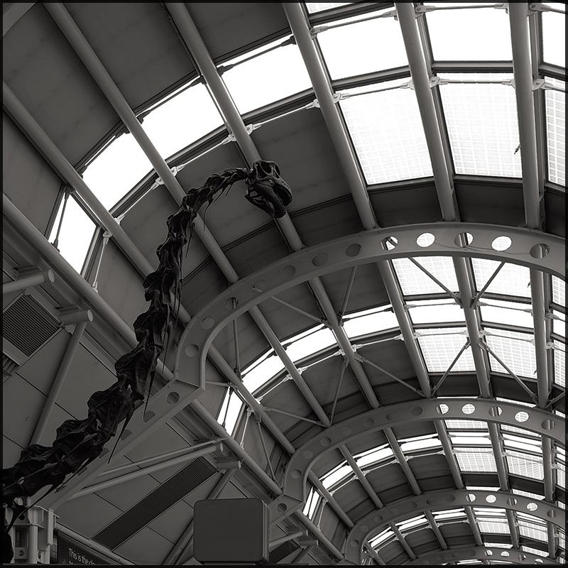 B-Rex by aponom