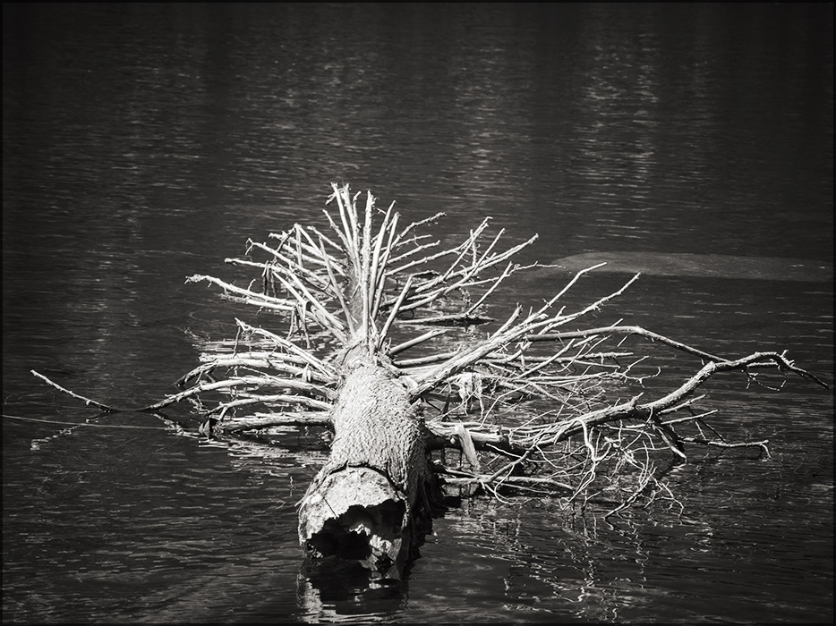 Uprooted by aponom