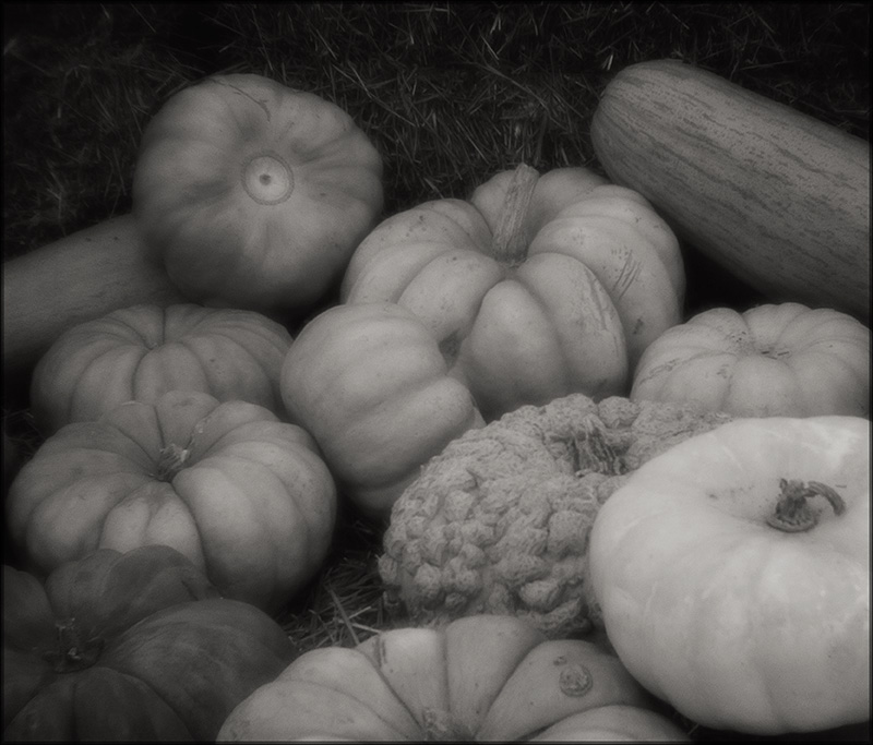 Harvest by aponom