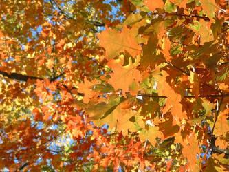 Pure Autumn by Qayinn