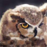 The Serious Horned Owl by VisualCondyle