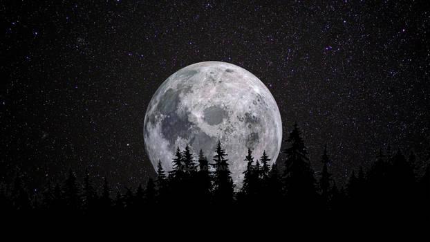 Full moon forest