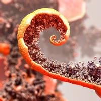New Life on an Old Orange Peel by dainbramage1