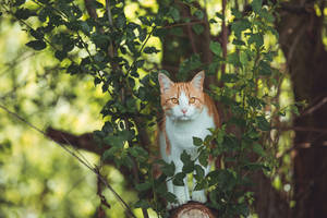 King of the Jungle by Onistocke