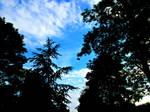 Silhouette Skies