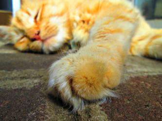 Sleepy Lion by FightingFlames