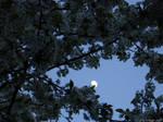 nachtschatten by sommerstod
