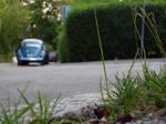 karl-der-kaefer by sommerstod
