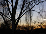 of an evening and a birch by sommerstod