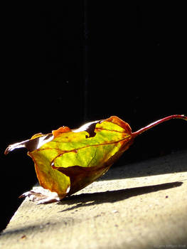 autumn-in-a-box-15 by sommerstod