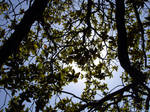 leaves by sommerstod