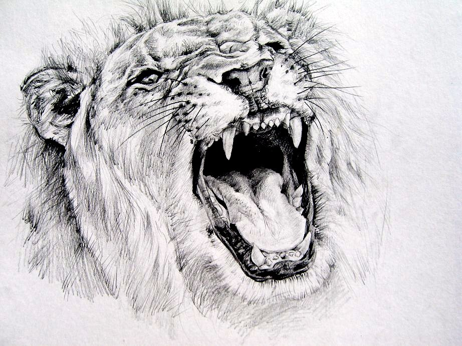 Roaring Lion Pencil Drawing Images & Pictures - Becuo