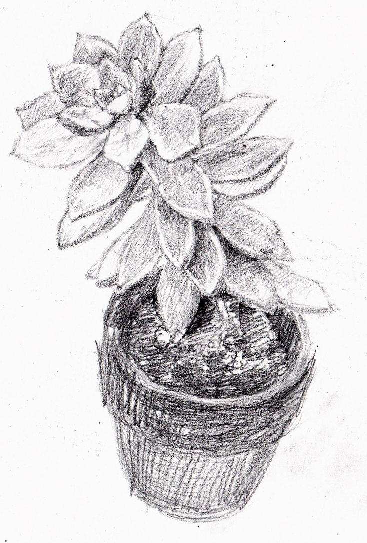 Succulent by KingVahagn