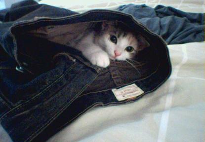 Kitten in jeans by slugo