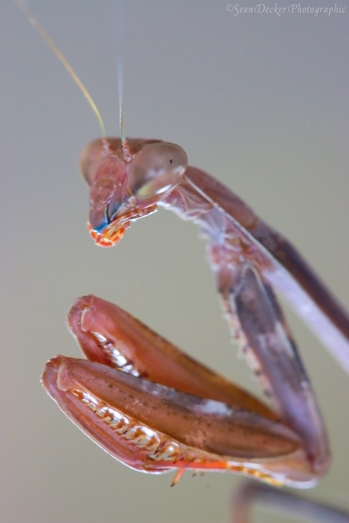 Mantis 1 by SWDPhoto