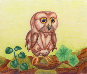 Baby owl original background by roslaug