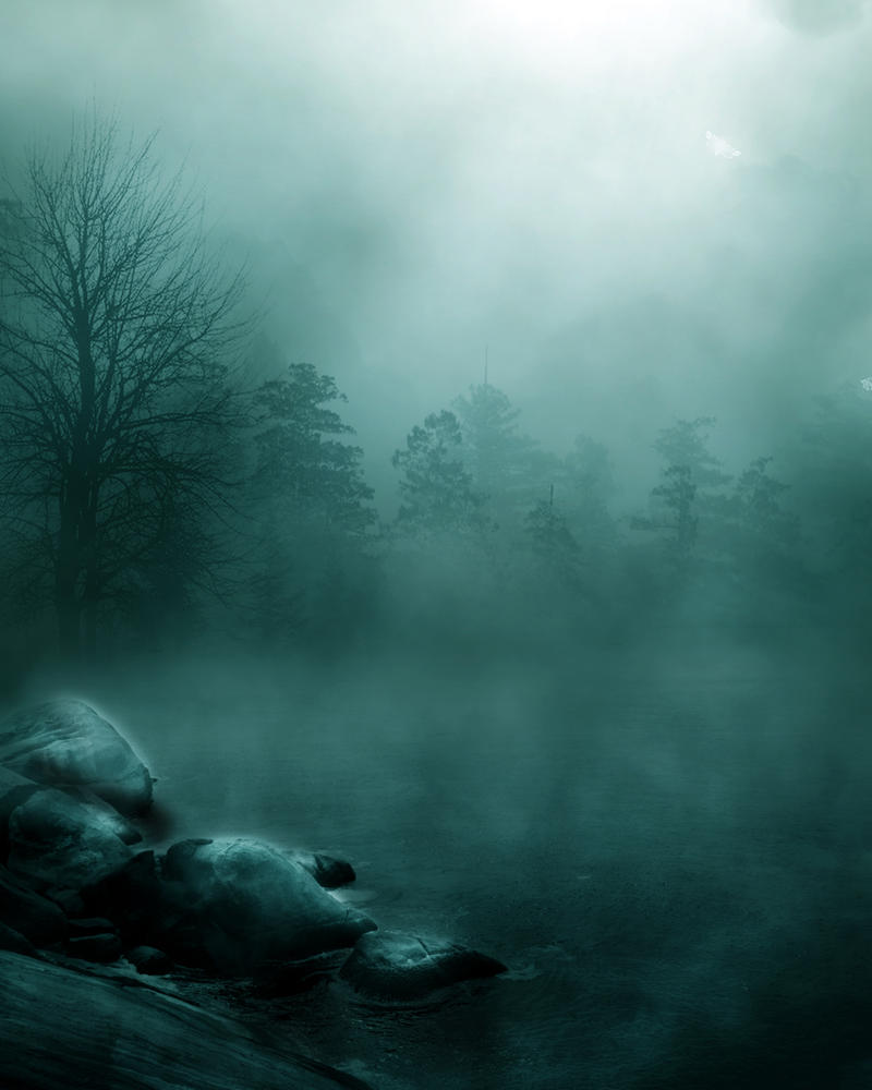 foggy forest by a - photo #34