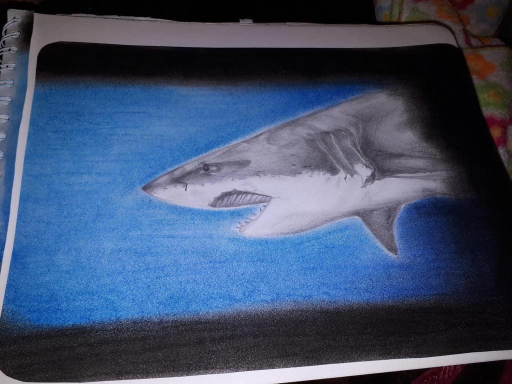 Shark by Katsuya1100