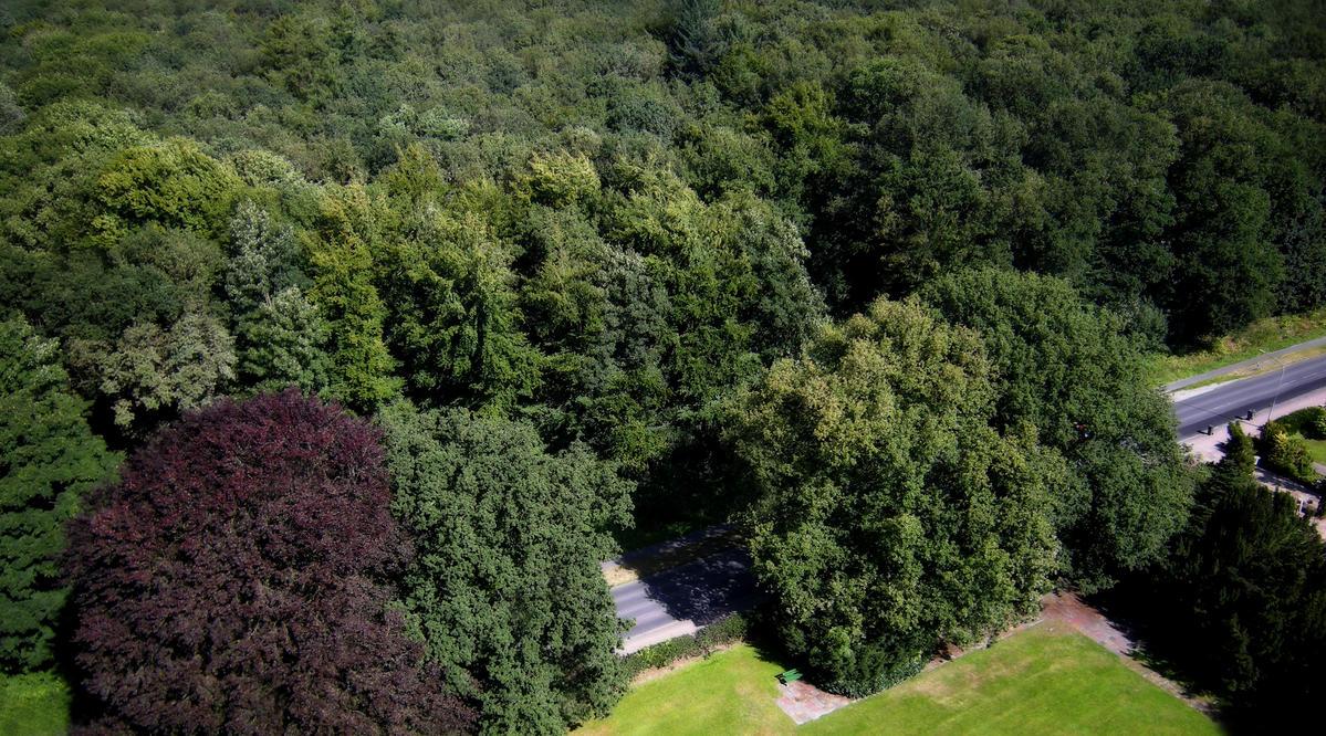 nice view evergreen trees - photo #12