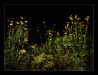 nachtblumen nightflowers 2 by feldrand