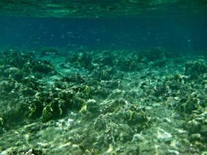 SEAty Life