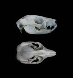 Koomal skull by Exifia