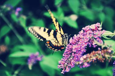 Butterfly by Luckyebbie