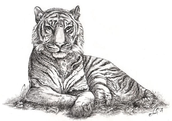 http://fc03.deviantart.net/fs24/i/2008/010/3/c/Tiger_by_AnnaOriona.jpg