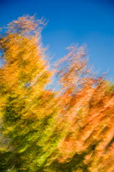 Fall Quake by snakstock