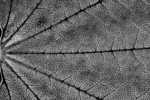 Macro Leaf 01 by snakstock