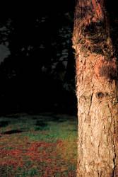 Dark Tree by snakstock