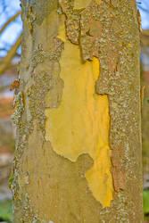 Tree 02 by snakstock