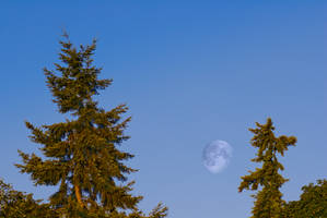 Sunrise Moon by snakstock