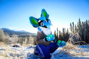 Alaska Xusho Wolf  by BluexBlack907