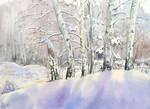 Birch-trees in winter