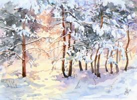 Winter pines by mashami